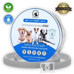 Flea Tick Collar Prevention Control for Dogs - 8 Months - Na