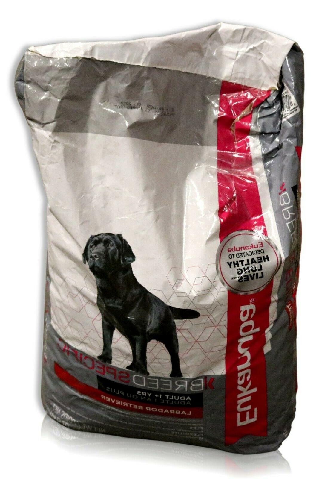 breed specific labrador retriever dog
