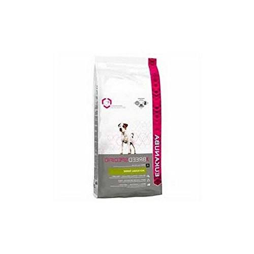 jack russell terrier dog food