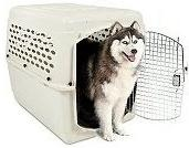 Vari-Kennel #500 Plastic Dog Crates - 2 Pack